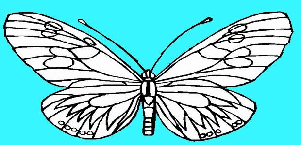 לחצו על דפי הצביעה של פרפרים להגדלה ולהדפסה