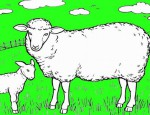לחצו על דפי הצביעה של כבשים להגדלה ולהדפסה