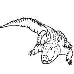 דף צביעה תנין 7