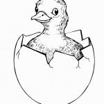 דף צביעה גוזל בוקע מן הביצה