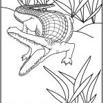 דף צביעה תנין 13
