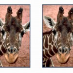 animals_puzzle45