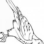 דף צביעה ציפור 8