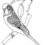 דף צביעה ציפור 5
