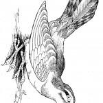 דף צביעה ציפור 4
