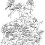 מפגש בין ציפורים ותוכים