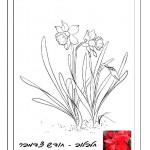 פרח המסמל את חודש יום ההולדת 7