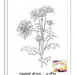 פרח המסמל את חודש יום ההולדת 6
