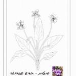 פרח המסמל את חודש יום ההולדת 3