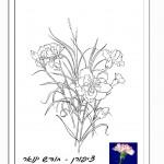 פרח המסמל את חודש יום ההולדת 2