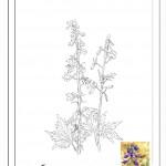 פרח המסמל את חודש יום ההולדת 9