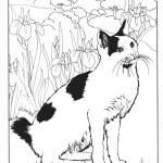 דף צביעה חתול 8