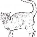 דף צביעה חתול 4