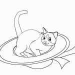 דף צביעה חתול רובץ בתוך כובע