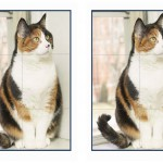 cats_puzzle6