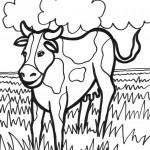 דף צביעה פרה 4