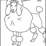 דף צביעה כלב פודל מטופח