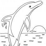 דף צביעה דולפין 2