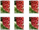 לחצו על דפי ההבדלים להגדלה ולהדפסה כנסו לדפי צביעה פרחים