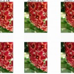 flower_diff1