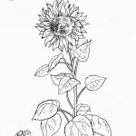 דף צביעה פרחים 2