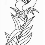 דף צביעה פרחים 52