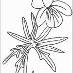 דף צביעה פרחים 51