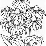 דף צביעה פרחים 50