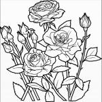 דף צביעה פרחים 44