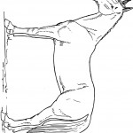 דף צביעה סוס 10