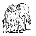 דף צביעה סוסה וסייח
