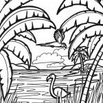 חסידות בג'ונגל