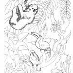 דף צביעה קוף ותוכים ביערות הג'ונגל