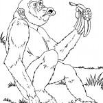 דף צביעה קוף מחזיק באשכול בננות
