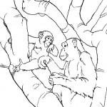 שני קופים משוחחים על גזע עץ