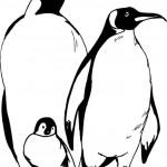 דף צביעה אבא אימא ופינגווין הקטן