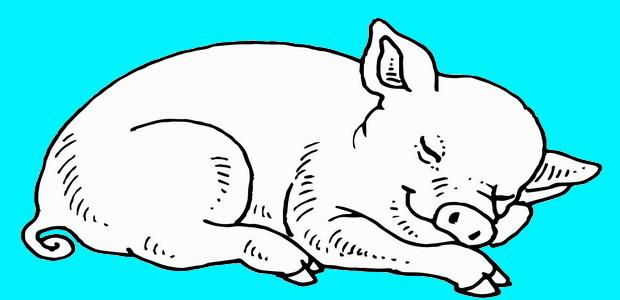 לחצו על דפי הצביעה של חזירים להגדלה ולהדפסה