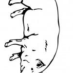 דף צביעה חזיר 3