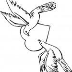 דף צביעה סיפור אהבה בין יונים