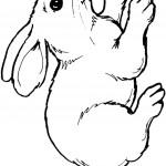 דף צביעה ארנב 2