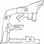 דף צביעה מיקרוסקופ 1