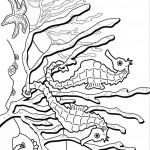 דף צביעה סוס ים 13