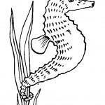 דף צביעה סוס ים 9