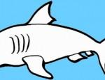 לחצו על דפי הצביעה של כרישים להגדלה ולהדפסה