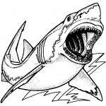 דף צביעה כריש 18