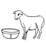 דף צביעה כבשה 4
