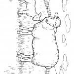 דף צביעה כבשה וגדי באחו