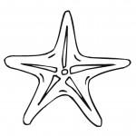 דף צביעה כוכב ים 7