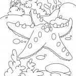 דף צביעה כוכב ים 4