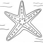דף צביעה כוכב ים 1
